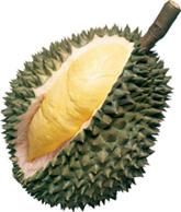 Durian Runtuh!